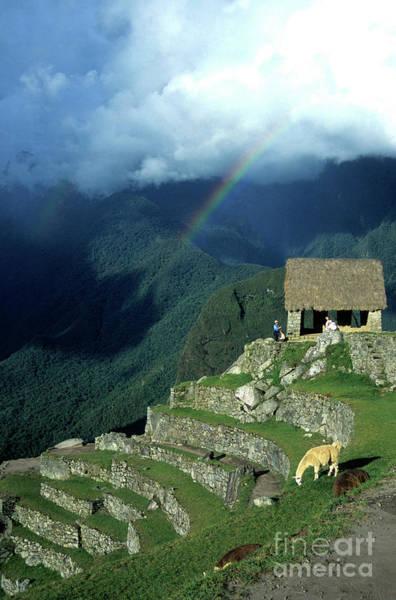 Llama And Rainbow At Machu Picchu Poster