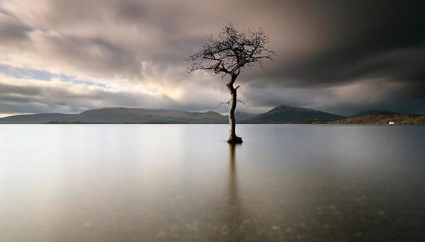 Loch Lomond Lone Tree Poster