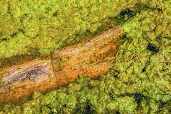 Log In Algae Poster
