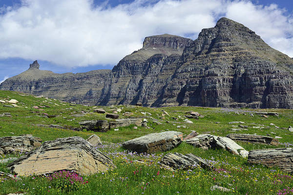 Logan Pass Meadow And Mountains In Glacier National Park Poster