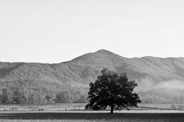 Lone Mountain Tree Poster
