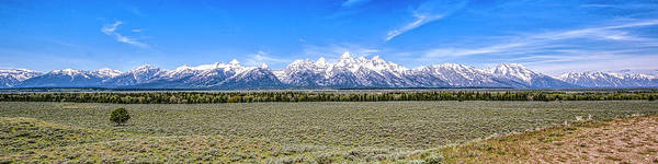 Lone Tree And The Tetons Poster