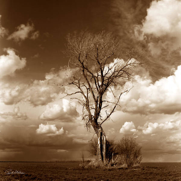 Poster featuring the photograph Lone Tree- Brown Tone by Rich Stedman