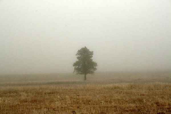 Lone Tree In Fog Poster