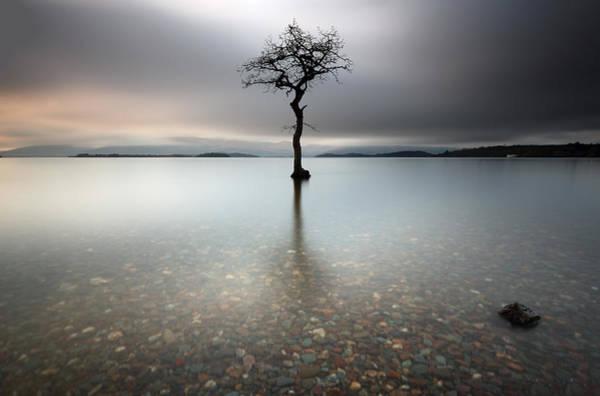 Lone Tree Loch Lomond Poster