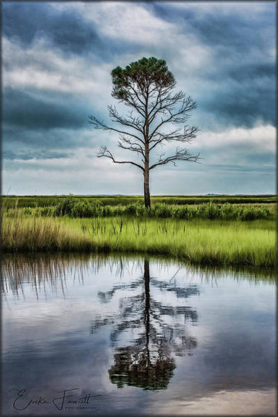 Lone Tree Reflected Poster