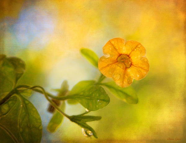 Lone Yellow Flower Poster