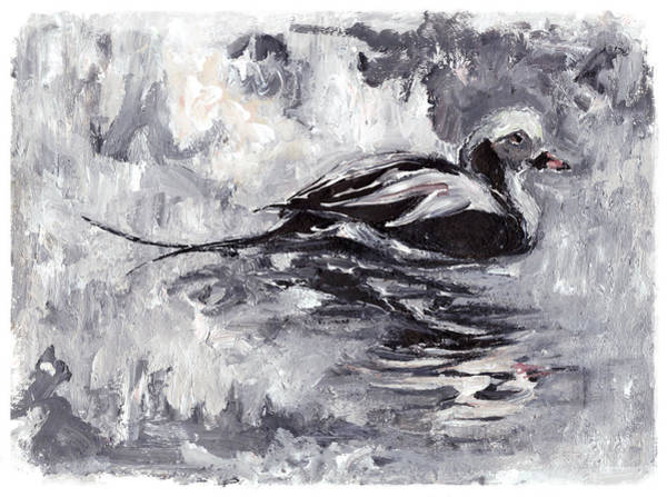 Long-tailed Duck Poster