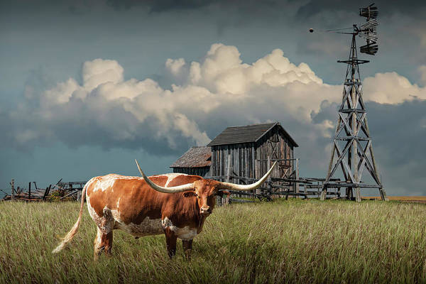 Longhorn Steer In A Prairie Pasture By Windmill And Old Gray Wooden Barn Poster