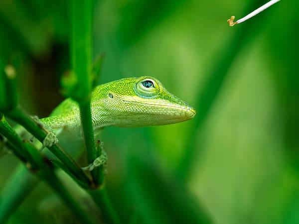 Look Up Lizard Poster
