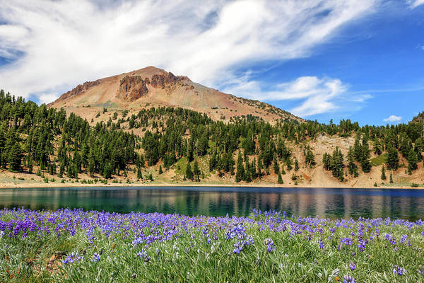 Lupines Lake And Lassen Poster