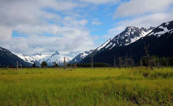 Lush Meadow In Alaska Poster