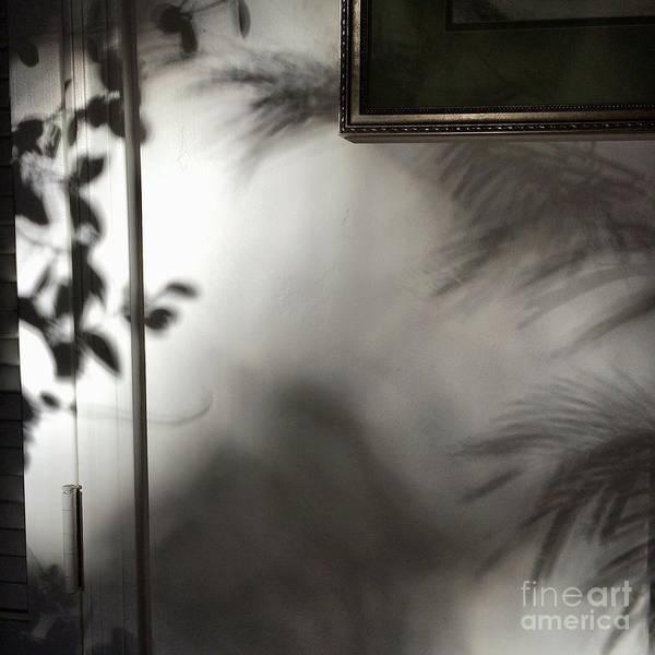 Lysiloma Shadows Poster