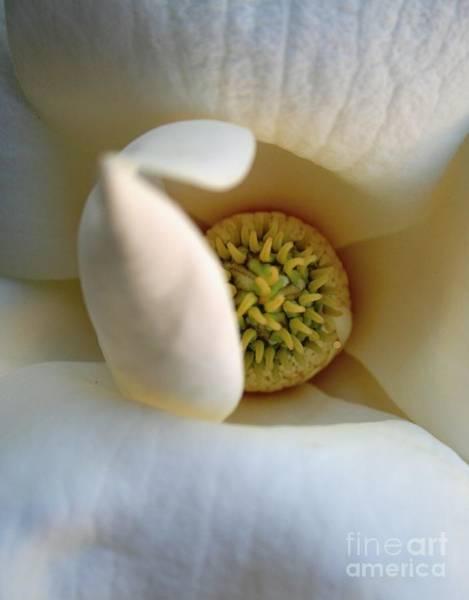 Macro Magnolia Poster