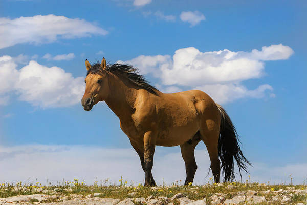 Magnificent Wild Horse Poster