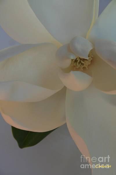Moody Magnolia  Poster