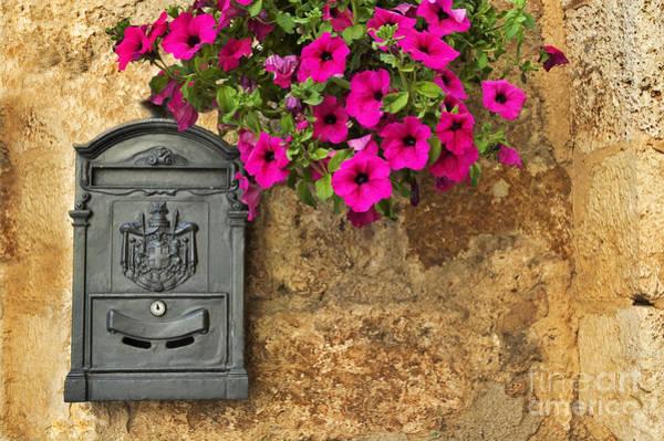 Mailbox With Petunias Poster