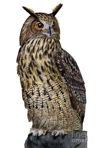 Majestic Eurasian Northern Eagle Owl Bubo Bubo - Hibou Grand-duc - Buho Real - Nationalpark Eifel Poster