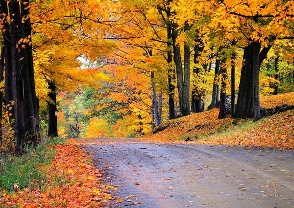 Maples Of Rupert Vermont Poster