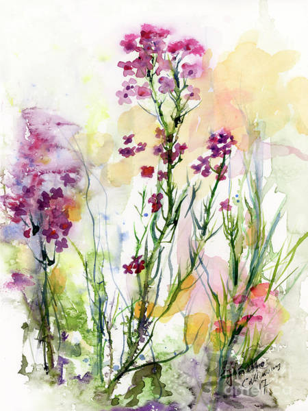 Medicinal Wild Flowers Dames Rocket Hesperus Matronalis Poster
