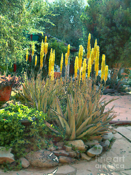 Medicine Aloes In Bloom Poster