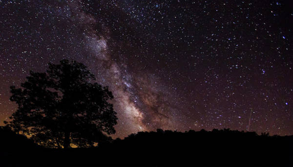 Milky Way And The Tree Poster
