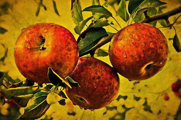Mister's Apples Poster