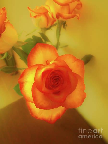 Misty Orange Rose Poster