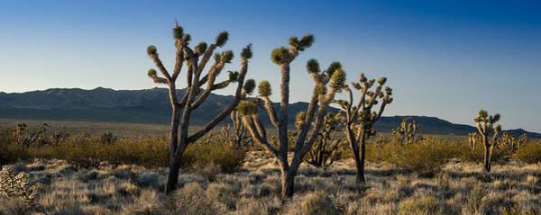 Mojave Desert Sunrise Poster
