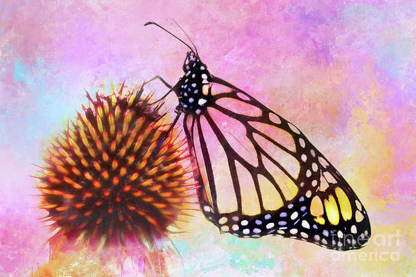 Monarch Butterfly On Coneflower Abstract Poster