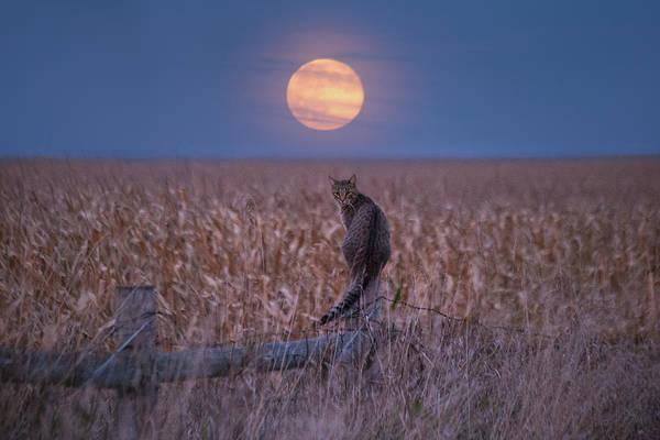 Moon Kitty  Poster