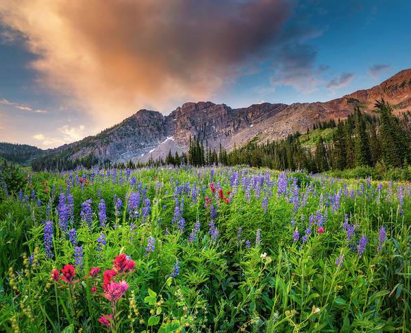 Morning Flowers In Little Cottonwood Canyon, Utah Poster