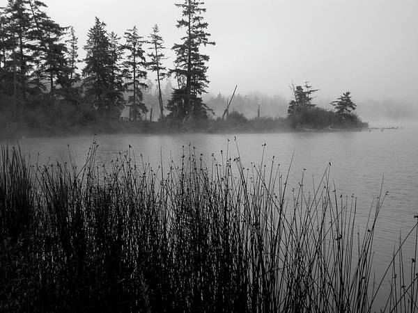 Morning Mist Poster