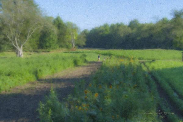 Morning Walk At Langwater Farm Poster