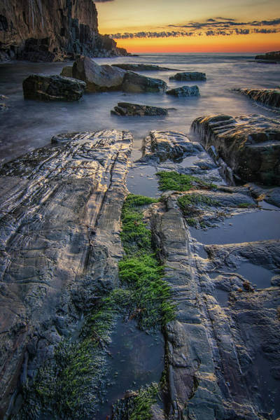 Mossy Rocks At Bald Head Cliff  Poster