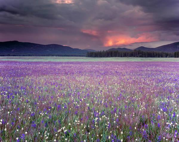 Mountain Meadow Purple Poster