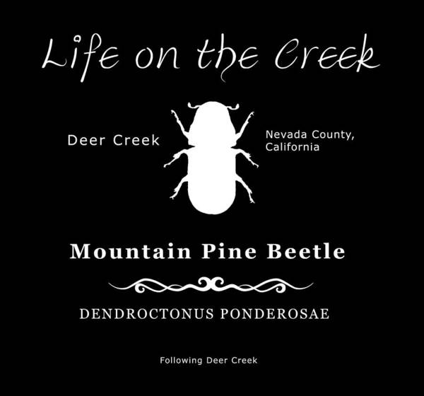 Mountain Pine Beetle White On Black Poster