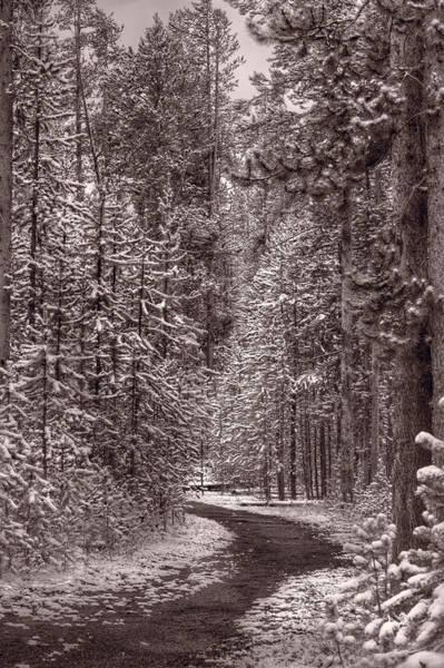 Mountain Trail Yellowstone Bw Poster