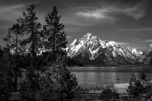 Mt. Moran And Trees Poster