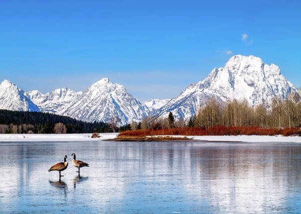 Mt Moran With Geese Poster