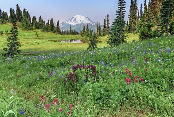 Mt Rainier Meadow Flowers Poster