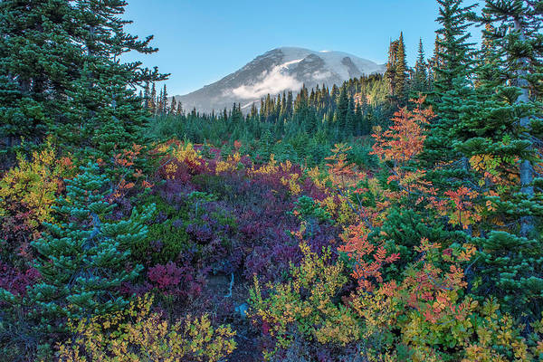 Mt Rainier With Autumn Colors Poster