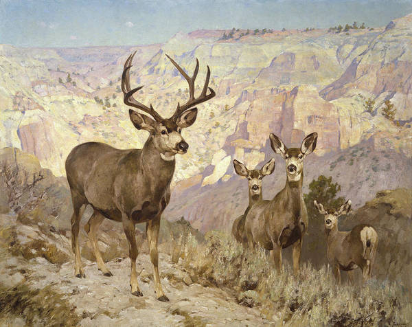 Mule Deer In The Badlands, Dawson County, Montana Poster