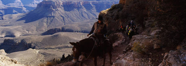 Mule Riders And Hikers On The Trail Poster
