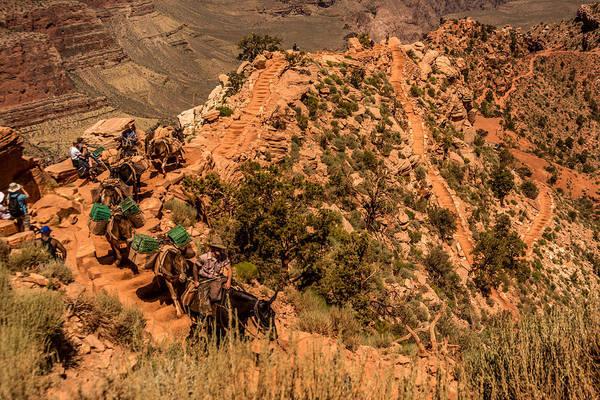 Mule Train South Kaibab Trail Poster
