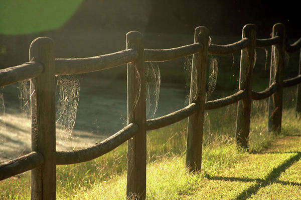 Poster featuring the photograph Multiple Spiderwebs On Wooden Fence by Emanuel Tanjala