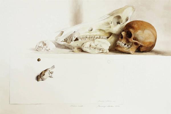 Nature Morte Poster