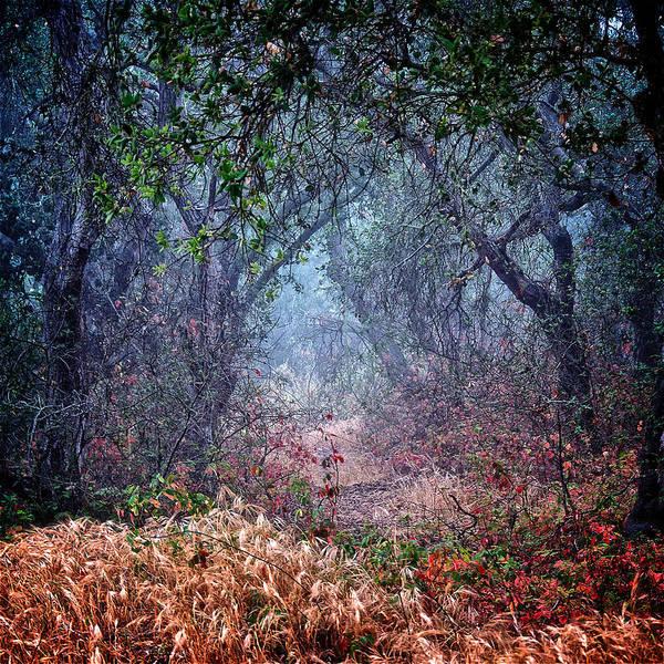 Nature's Chaos, Arroyo Grande, California Poster