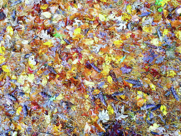 Natures Fall Falling Patterns Poster