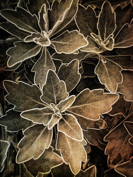 Natures Patterns Poster